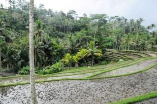 Indonésie-2013-989-33