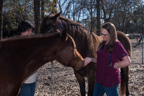 Dr. Holcombe with Horses - Faulkville Animal Hospital - Bloomingdale and Pooler, GA