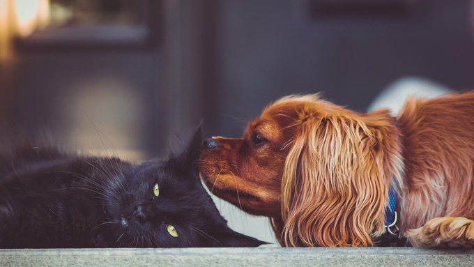 Dog Sniffing a Cat - Faulkville Animal Hospital - Pet Allergies and Dermatology Services - Bloomingdale, GA