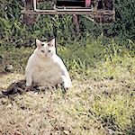 PDSA Animal Wellbeing Report 2012