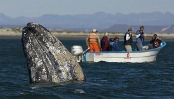 Conservation, Marine Mammals, And Animal Welfare