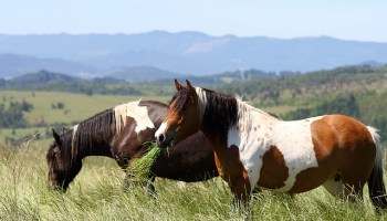 Horse Rescue: Can Saving Injured Animals Be Harmful?