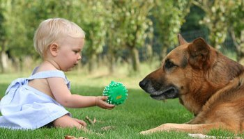 Raising Babies With Companion Dogs May Help Their Respiratory Health