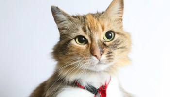 Assessing Cat Welfare In Shelters Using Simple Indicators