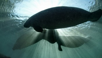 Mapping Conservation For Marine Mammals