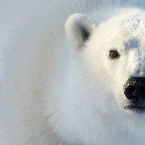 Wild, free and living the dream in Churchill, aka, Canada's amazing sub-Arctic
