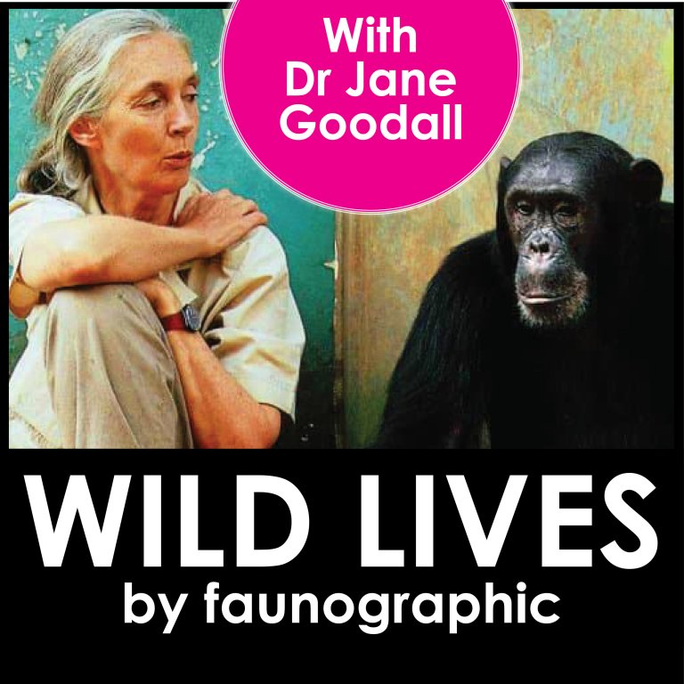Dr Jane Goodall: A Lifetime with Chimps