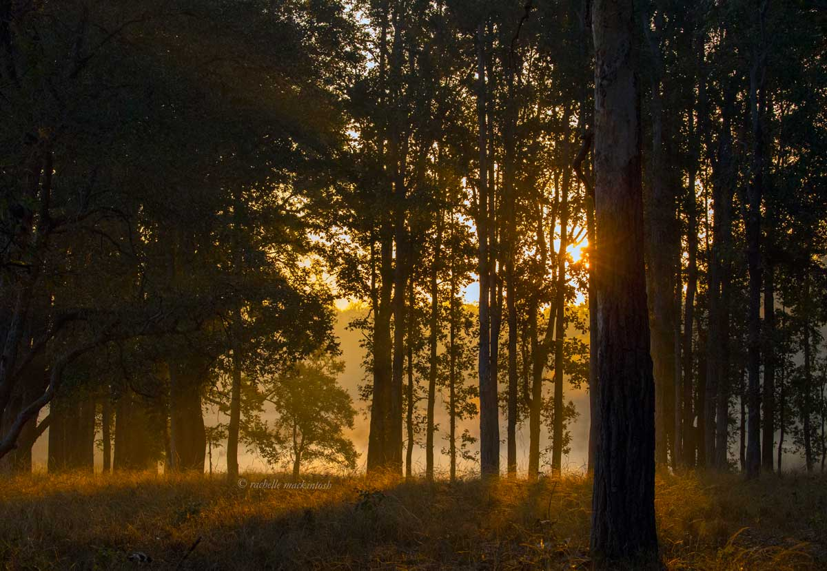kanha tiger reservel forest india