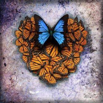 Heart Aflutter | Original Digital Artwork