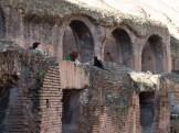 """Tourist trying to pet """"il gatto nero del Colosseo""""."""