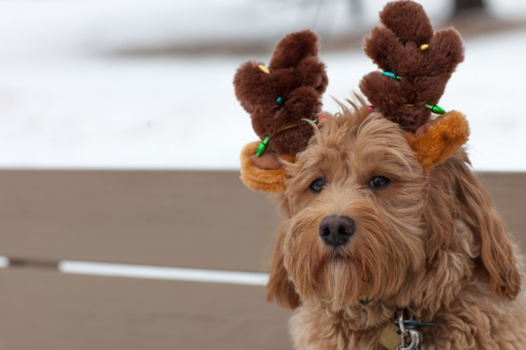 Chewie at the lake with antlers. Not happy. / Canon 5D Mark II w/EF 85mm f/1.2