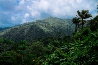 """""""El Yunque"""" / Leica M-P / Summilux 50mm"""