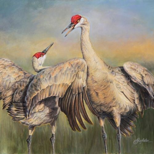 (Grid) The Tango Sandhill Cranes by Pam Stoehsler