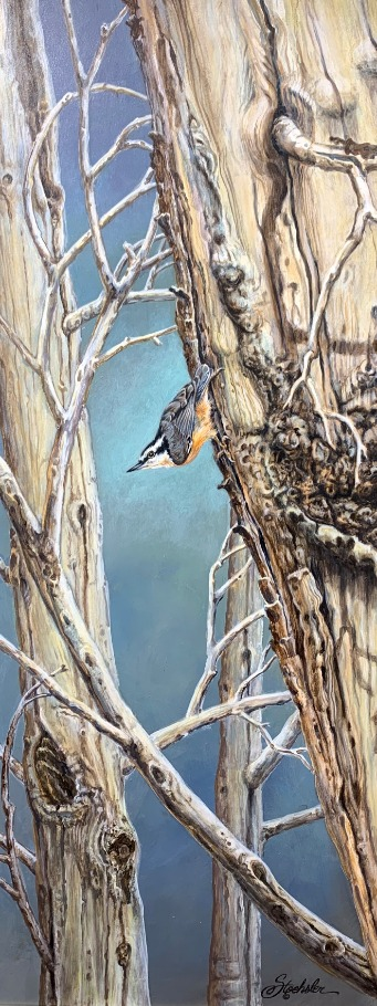 Red-breasted Nuthatch by Pam Stoehsler