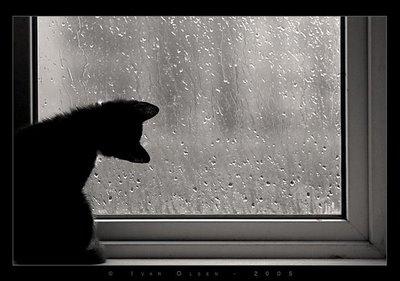 black and white, cat, dark, rain, sad