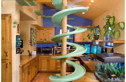 Real Cat Lovers Turn Their Homes into Cat Playlands