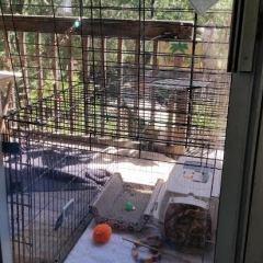 Outdoor to Indoor Cat Part 2 – What Happened