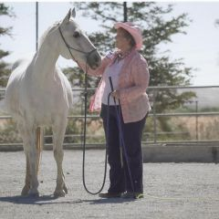 Need Funding for  Senior Horses in Santa Rosa About Top Lose Home