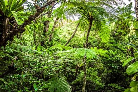 いまキテる「ジャングル男子」は草食系?ジャングルには男のロマンがある!…で、ジャングル男子って何?