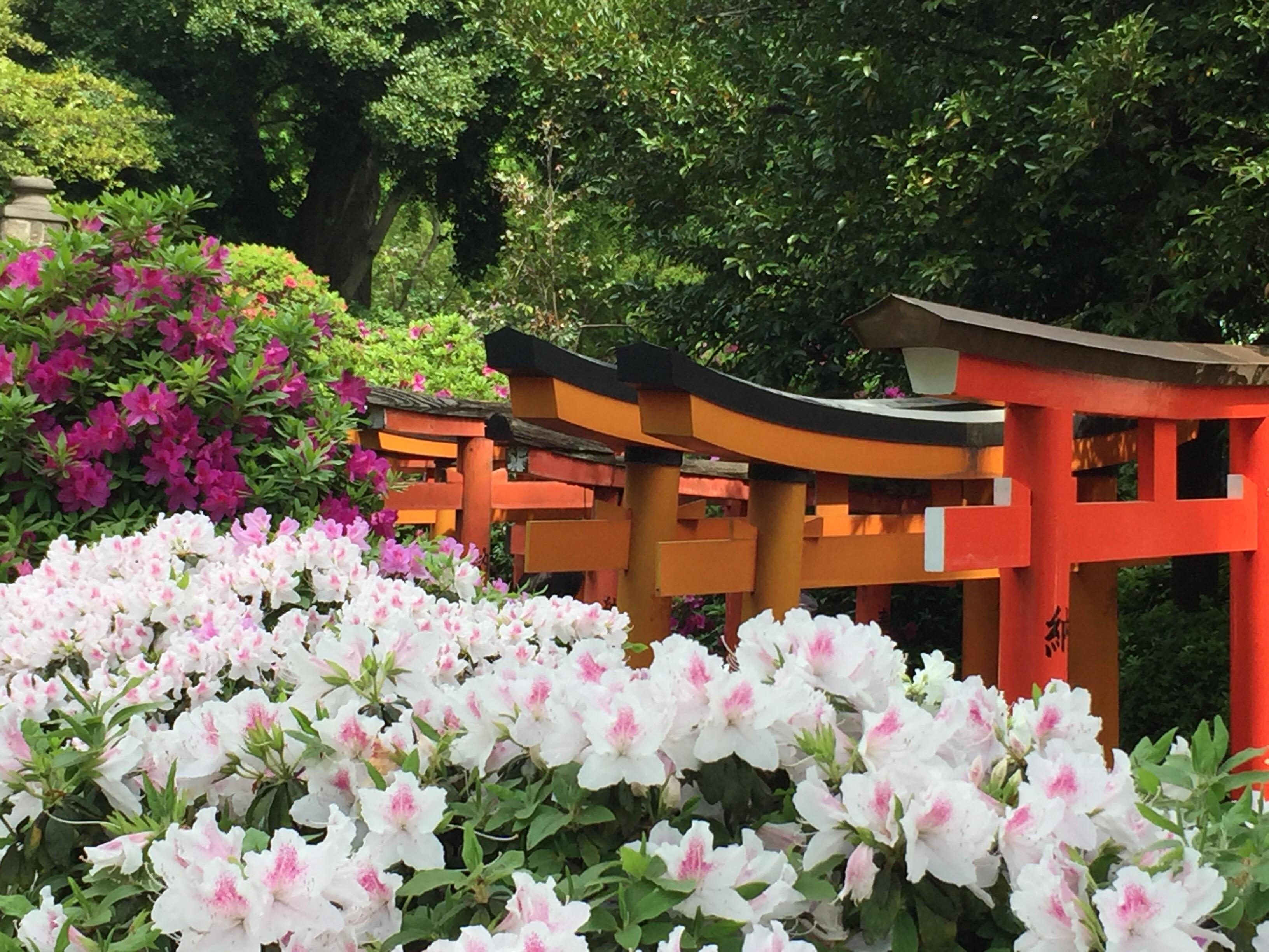 東京十社巡り「根津神社」!3,000本のツツジ咲くパワースポット