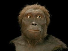 Australopithecus_afarensis_kl