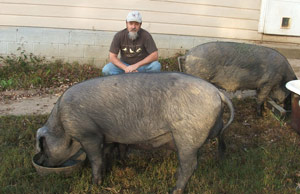 Ramsay with the pigs on his farm. The pig in the foreground in Homer.