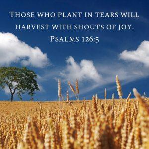 Hot Tears become Harvest Joy
