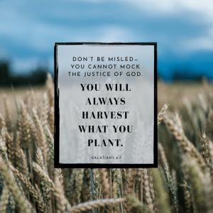 Choose your harvest: life or death