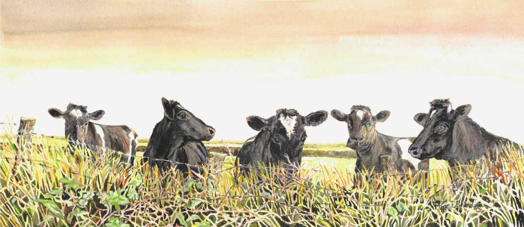 Cows, 'Just looking' - a watercolour by Faye Edmondson