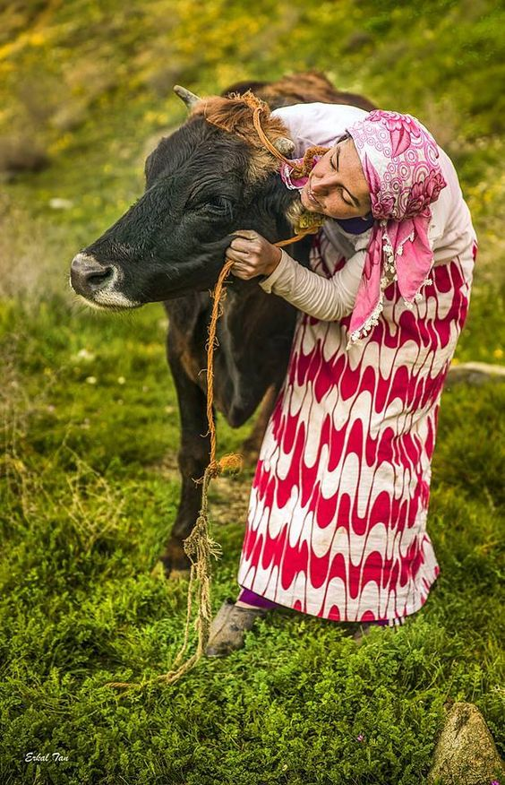 Turkish woman loves her cow