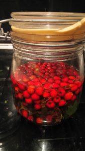 hawthorn elixir