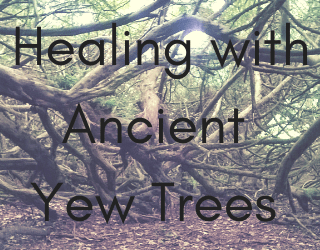 Healing, Magic and Mystery from Yew