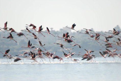 Birds Lake