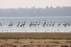 Flamingo_Fayoum_Egypt (12)