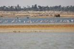 Flamingo_Fayoum_Egypt (18)