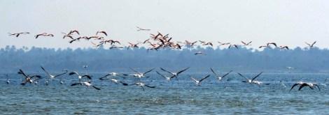 Flamingo_Fayoum_Egypt (2)