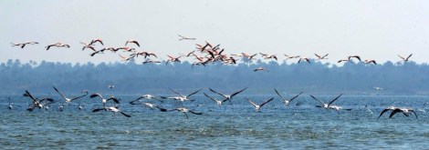 Flamingo_Fayoum_Egypt (2)
