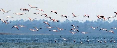 Flamingo_Fayoum_Egypt (20)