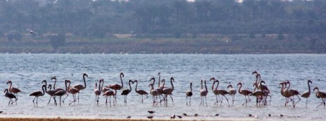 Flamingo_Fayoum_Egypt (32)