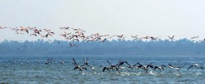 Flamingo_Fayoum_Egypt (34)