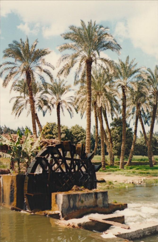 Fayoum-Egypt (15)