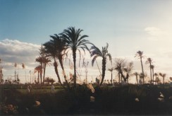 Fayoum-Egypt (7)