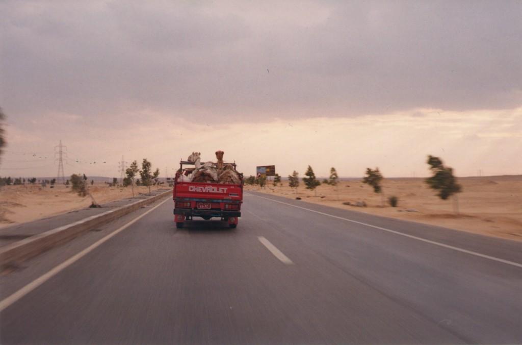 Fayoum-Egypt (9)