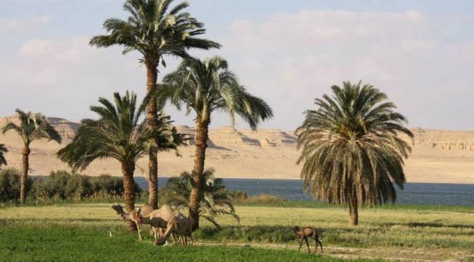 Tunis Village