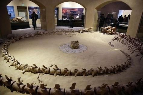 wadi-al-hitan-museum-4[2]