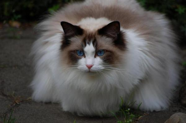 Необычные кошки мира фото