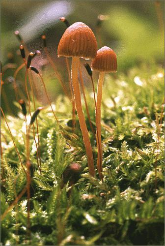 Можно ли беременным маринованные грибы опята