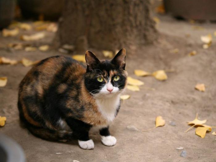 Зачем коту усы и как они называются по научному