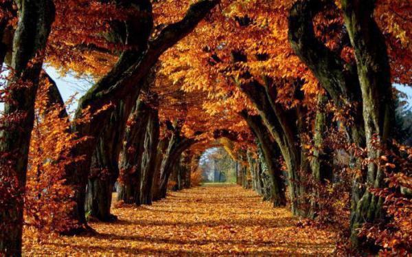 Природа осенью: череда удивительных метаморфоз