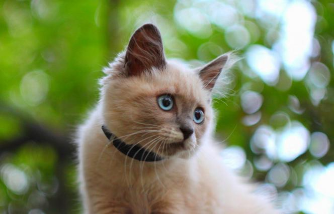 Сотрясение мозга у кошек: симптомы, первая помощь, лечение